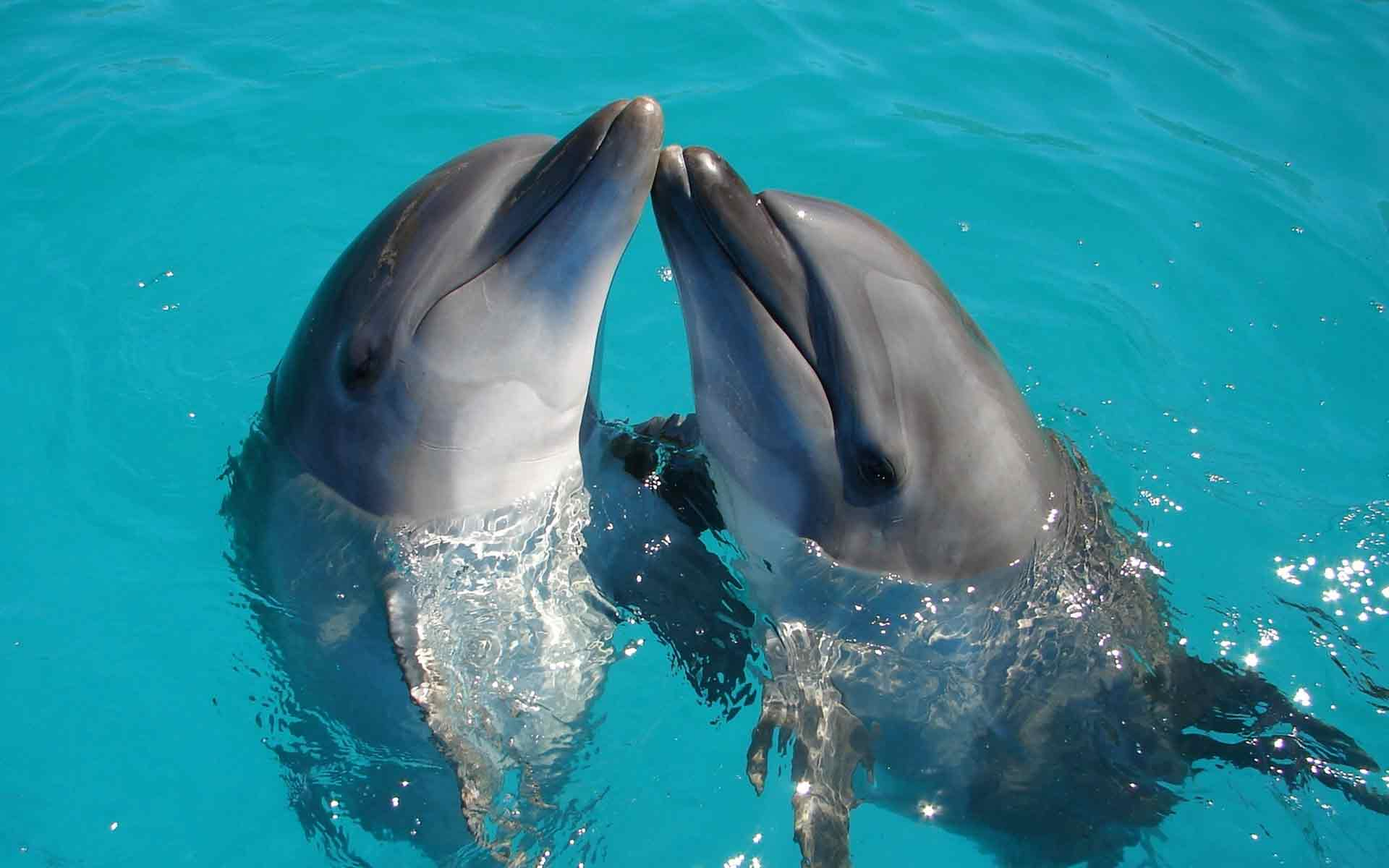 Dolphins playing. Photo by Ranae Smith on Unsplash.